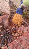 whisking the rock garden